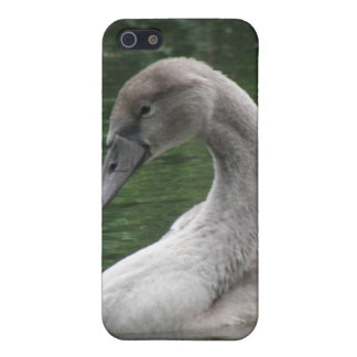 Graceful Swan on the Water  iPhone 5/5S Covers