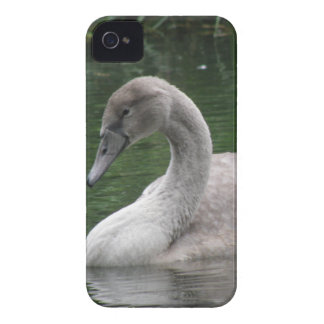 Graceful Swan on the Water iPhone Case
