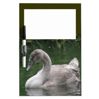 Graceful Swan on the Water Memo Board