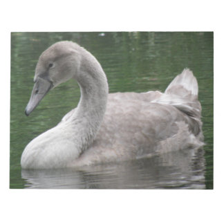 Graceful Swan on the Water Notepad