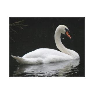 Graceful White Swan Canvas Print