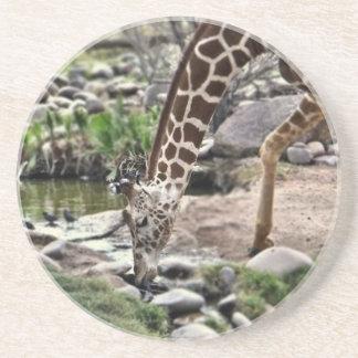 Gracious Giraffe Coaster
