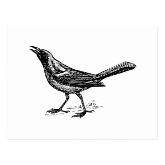Grackle Bird Vintage Sketch Postcard