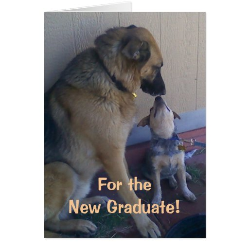 Congratulations funny dog - photo#8