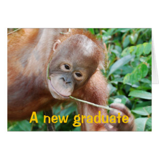 Graduation Humor Greeting Cards