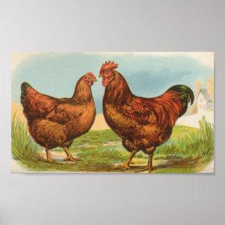 Graham - Rhode Island Red Chickens Poster