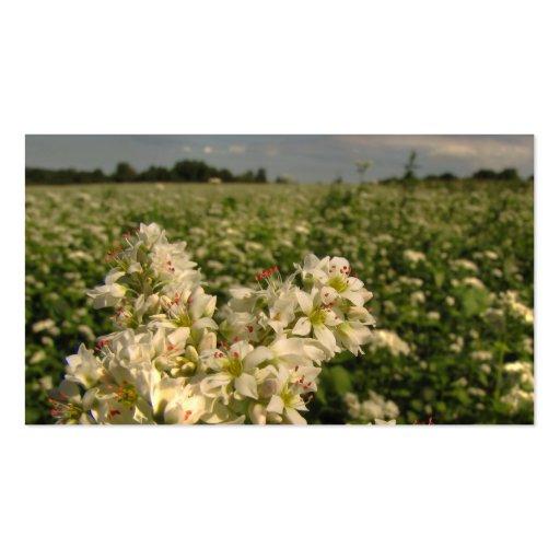 Grain Emporium - Field of Buckwheat Business Card Templates