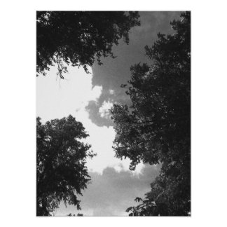Grainy Black and White image of Trees and Sky. Poster