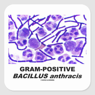 Gram-Positive Bacillus anthracis (Bacteria) Square Sticker