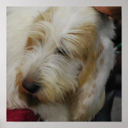 Grand Basset Dog Poster
