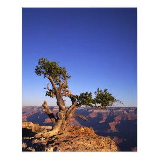 Grand Canyon, Arizona, USA Art Photo