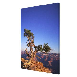 Grand Canyon, Arizona, USA Canvas Print