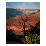 Grand Canyon Flora Posters