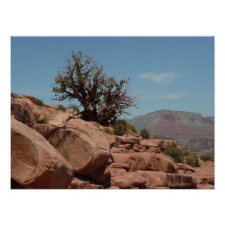 Grand Canyon Shrub Poster