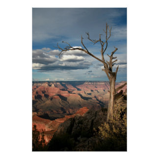 Grand Canyon Tree Poster