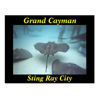 Grand Cayman sting ray city postcard