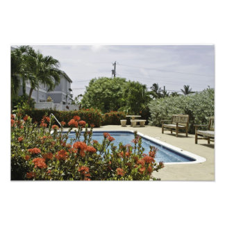 Grand Cayman Tropical Flower Pool Photo