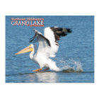 Grand Lake Oklahoma post card pelican 16v1