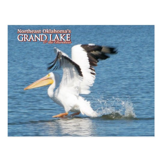 Grand Lake Oklahoma post card pelican 16v1