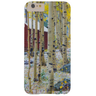 Grand Mesa Solitary cabin in a forest Barely There iPhone 6 Plus Case