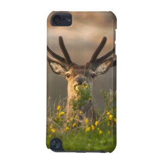 Grand Roe Deer Buck iPone 3 Case