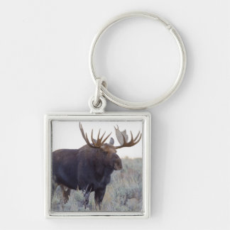 Grand Teton National Park, Bull Moose Silver-Colored Square Key Ring