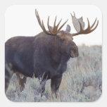 Grand Teton National Park, Bull Moose Square Sticker