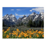 Grand Teton National Park Postcards
