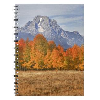 Grand Teton NP, Mount Moran and aspen trees Notebooks
