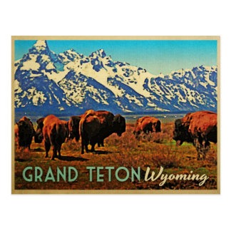 Grand Teton Wyoming Buffalo Postcard