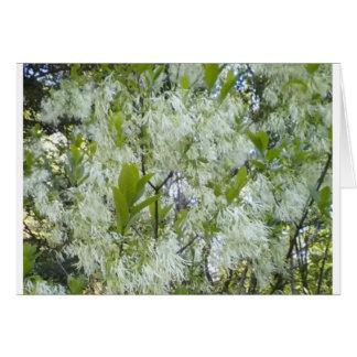 Grandaddy Graybeard Tree Note Cards