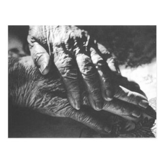Grandma Hands Postcard