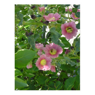Grandma's Wild Flower Postcard
