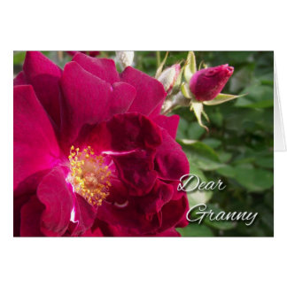 Grandparents Day for Granny, Red Rose and Bud Greeting Card