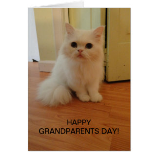 Grandparents Day, White Cat Greeting Card