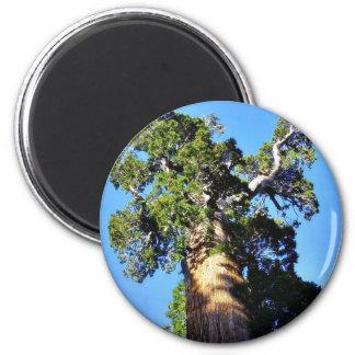 Grant Trees Sequoias Bark Branches 6 Cm Round Magnet