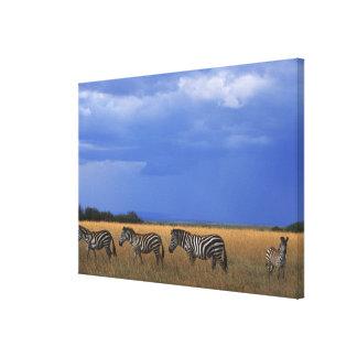 Grant Zebra 2 Canvas Print