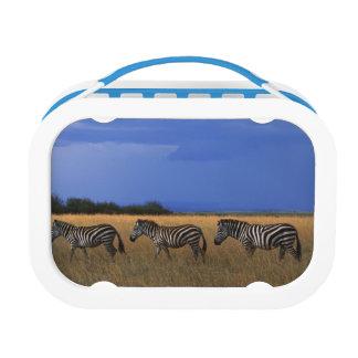 Grant Zebra 2 Lunch Box