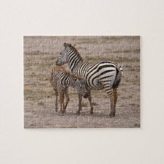 Grant Zebra 3 Jigsaw Puzzle