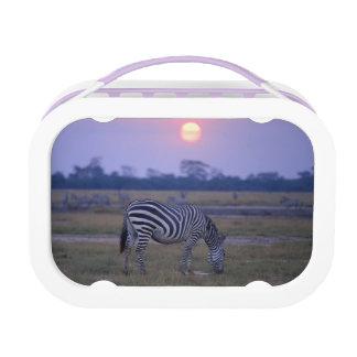 Grant Zebra 3 Lunchbox