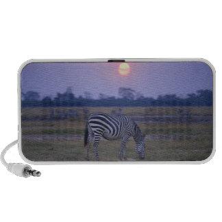 Grant Zebra 3 Mini Speaker