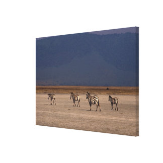 Grant Zebra 4 Canvas Print