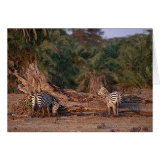 Grant Zebra 5 Cards