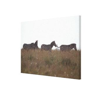 Grant Zebra 7 Canvas Print