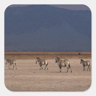 Grant Zebra Square Sticker