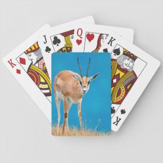 Grant's Gazelle (Gazella Granti) Ewe Portrait Playing Cards