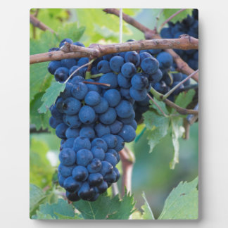 grape and vineyard plaque