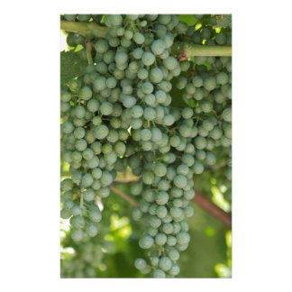grape and vineyard stationery