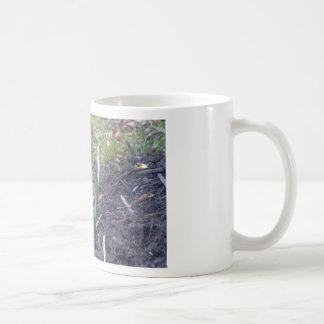 Grape Hyacinth Blossom Photography Basic White Mug