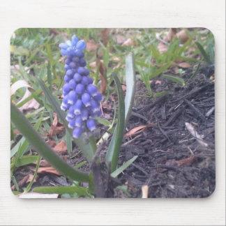 Grape Hyacinth Blossom Photography Mouse Pads